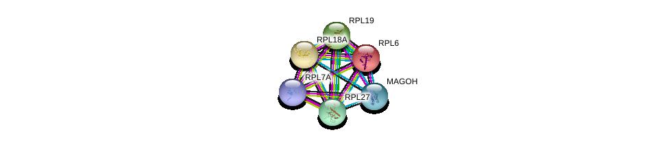 http://string-db.org/version_10/api/image/networkList?limit=0&targetmode=proteins&caller_identity=gene_cards&network_flavor=evidence&identifiers=9606.ENSP00000361076%0d%0a9606.ENSP00000360525%0d%0a9606.ENSP00000202773%0d%0a9606.ENSP00000222247%0d%0a9606.ENSP00000225430%0d%0a9606.ENSP00000253788%0d%0a