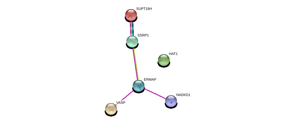 http://string-db.org/version_10/api/image/networkList?limit=0&targetmode=proteins&caller_identity=gene_cards&network_flavor=evidence&identifiers=9606.ENSP00000361592%0d%0a9606.ENSP00000371362%0d%0a9606.ENSP00000245932%0d%0a9606.ENSP00000278412%0d%0a9606.ENSP00000216297%0d%0a9606.ENSP00000264108%0d%0a