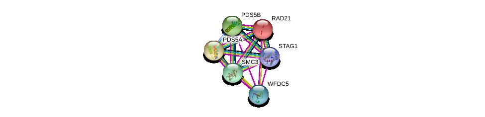 http://string-db.org/version_10/api/image/networkList?limit=0&targetmode=proteins&caller_identity=gene_cards&network_flavor=evidence&identifiers=9606.ENSP00000361875%0d%0a9606.ENSP00000354720%0d%0a9606.ENSP00000372689%0d%0a9606.ENSP00000313851%0d%0a9606.ENSP00000303427%0d%0a9606.ENSP00000297338%0d%0a