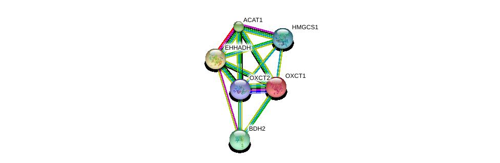 http://string-db.org/version_10/api/image/networkList?limit=0&targetmode=proteins&caller_identity=gene_cards&network_flavor=evidence&identifiers=9606.ENSP00000361914%0d%0a9606.ENSP00000196371%0d%0a9606.ENSP00000231887%0d%0a9606.ENSP00000265838%0d%0a9606.ENSP00000296424%0d%0a9606.ENSP00000322706%0d%0a