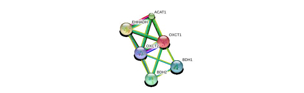 http://string-db.org/version_10/api/image/networkList?limit=0&targetmode=proteins&caller_identity=gene_cards&network_flavor=evidence&identifiers=9606.ENSP00000361914%0d%0a9606.ENSP00000196371%0d%0a9606.ENSP00000350914%0d%0a9606.ENSP00000231887%0d%0a9606.ENSP00000265838%0d%0a9606.ENSP00000296424%0d%0a