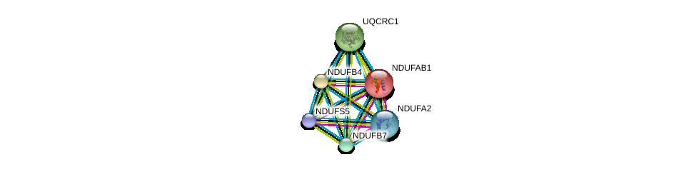 http://string-db.org/version_10/api/image/networkList?limit=0&targetmode=proteins&caller_identity=gene_cards&network_flavor=evidence&identifiers=9606.ENSP00000362058%0d%0a9606.ENSP00000252102%0d%0a9606.ENSP00000007516%0d%0a9606.ENSP00000184266%0d%0a9606.ENSP00000203407%0d%0a9606.ENSP00000215565%0d%0a
