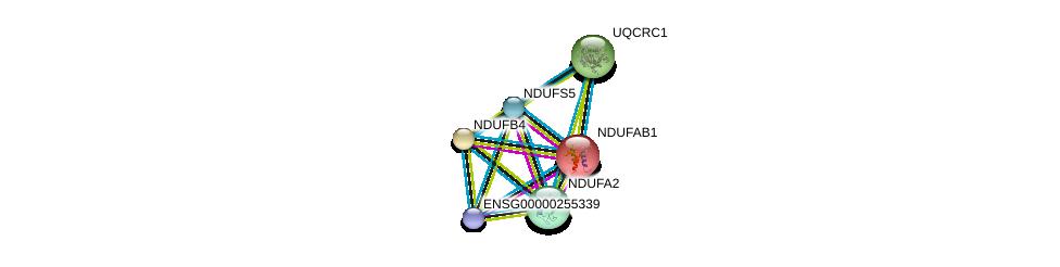 http://string-db.org/version_10/api/image/networkList?limit=0&targetmode=proteins&caller_identity=gene_cards&network_flavor=evidence&identifiers=9606.ENSP00000362058%0d%0a9606.ENSP00000252102%0d%0a9606.ENSP00000007516%0d%0a9606.ENSP00000456832%0d%0a9606.ENSP00000184266%0d%0a9606.ENSP00000203407%0d%0a