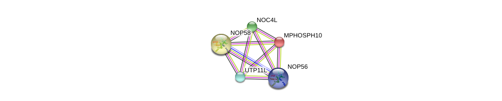 http://string-db.org/version_10/api/image/networkList?limit=0&targetmode=proteins&caller_identity=gene_cards&network_flavor=evidence&identifiers=9606.ENSP00000362105%0d%0a9606.ENSP00000244230%0d%0a9606.ENSP00000264279%0d%0a9606.ENSP00000370589%0d%0a9606.ENSP00000370589%0d%0a9606.ENSP00000328854%0d%0a