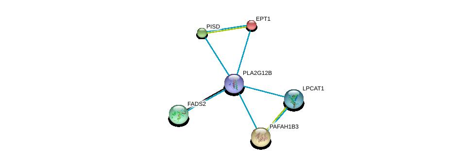 http://string-db.org/version_10/api/image/networkList?limit=0&targetmode=proteins&caller_identity=gene_cards&network_flavor=evidence&identifiers=9606.ENSP00000362123%0d%0a9606.ENSP00000260585%0d%0a9606.ENSP00000262890%0d%0a9606.ENSP00000266095%0d%0a9606.ENSP00000278840%0d%0a9606.ENSP00000283415%0d%0a