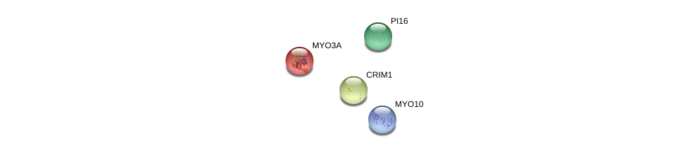 http://string-db.org/version_10/api/image/networkList?limit=0&targetmode=proteins&caller_identity=gene_cards&network_flavor=evidence&identifiers=9606.ENSP00000362778%0d%0a9606.ENSP00000280527%0d%0a9606.ENSP00000265944%0d%0a9606.ENSP00000421280%0d%0a