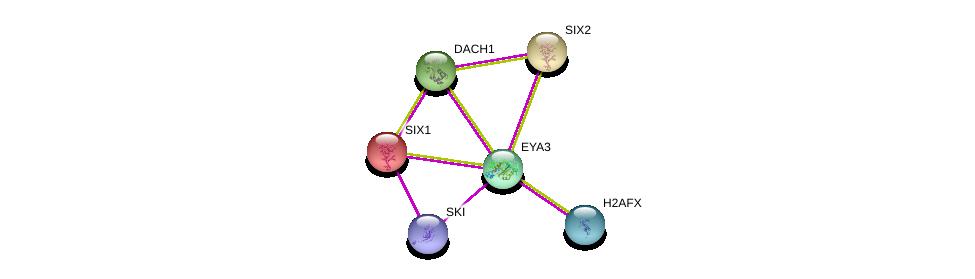 http://string-db.org/version_10/api/image/networkList?limit=0&targetmode=proteins&caller_identity=gene_cards&network_flavor=evidence&identifiers=9606.ENSP00000362978%0d%0a9606.ENSP00000247182%0d%0a9606.ENSP00000304502%0d%0a9606.ENSP00000304994%0d%0a9606.ENSP00000367797%0d%0a9606.ENSP00000364310%0d%0a