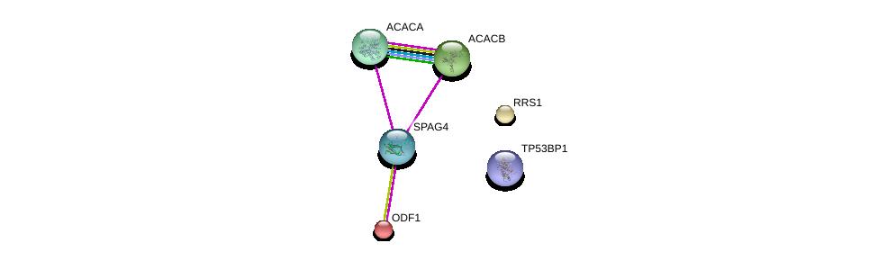 http://string-db.org/version_10/api/image/networkList?limit=0&targetmode=proteins&caller_identity=gene_cards&network_flavor=evidence&identifiers=9606.ENSP00000363391%0d%0a9606.ENSP00000341044%0d%0a9606.ENSP00000344789%0d%0a9606.ENSP00000285402%0d%0a9606.ENSP00000322396%0d%0a9606.ENSP00000371475%0d%0a