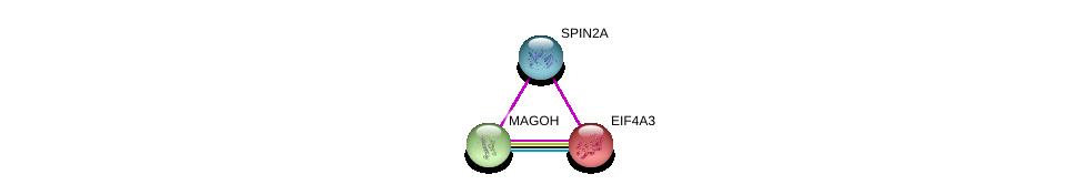 http://string-db.org/version_10/api/image/networkList?limit=0&targetmode=proteins&caller_identity=gene_cards&network_flavor=evidence&identifiers=9606.ENSP00000364041%0d%0a9606.ENSP00000360525%0d%0a9606.ENSP00000269349%0d%0a