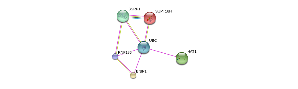http://string-db.org/version_10/api/image/networkList?limit=0&targetmode=proteins&caller_identity=gene_cards&network_flavor=evidence&identifiers=9606.ENSP00000364263%0d%0a9606.ENSP00000344818%0d%0a9606.ENSP00000231668%0d%0a9606.ENSP00000216297%0d%0a9606.ENSP00000278412%0d%0a9606.ENSP00000264108%0d%0a