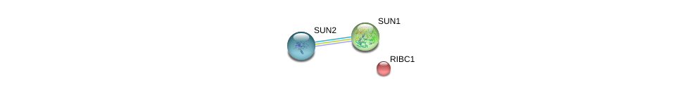 http://string-db.org/version_10/api/image/networkList?limit=0&targetmode=proteins&caller_identity=gene_cards&network_flavor=evidence&identifiers=9606.ENSP00000364476%0d%0a9606.ENSP00000385616%0d%0a9606.ENSP00000384015%0d%0a
