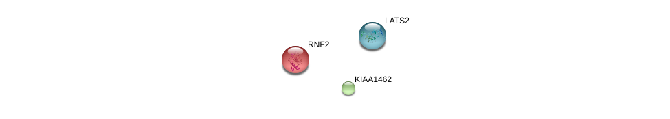 http://string-db.org/version_10/api/image/networkList?limit=0&targetmode=proteins&caller_identity=gene_cards&network_flavor=evidence&identifiers=9606.ENSP00000364526%0d%0a9606.ENSP00000356480%0d%0a9606.ENSP00000372035%0d%0a
