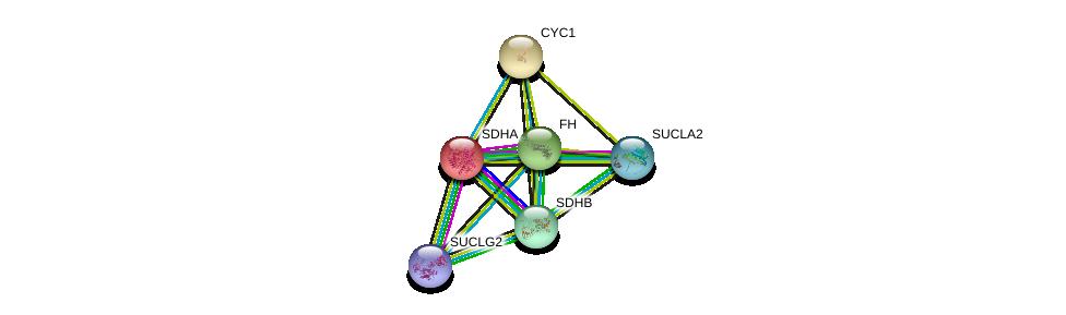 http://string-db.org/version_10/api/image/networkList?limit=0&targetmode=proteins&caller_identity=gene_cards&network_flavor=evidence&identifiers=9606.ENSP00000364649%0d%0a9606.ENSP00000264932%0d%0a9606.ENSP00000367923%0d%0a9606.ENSP00000317159%0d%0a9606.ENSP00000419325%0d%0a9606.ENSP00000355518%0d%0a
