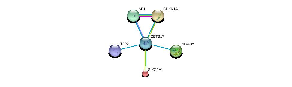 http://string-db.org/version_10/api/image/networkList?limit=0&targetmode=proteins&caller_identity=gene_cards&network_flavor=evidence&identifiers=9606.ENSP00000364895%0d%0a9606.ENSP00000438262%0d%0a9606.ENSP00000298687%0d%0a9606.ENSP00000233202%0d%0a9606.ENSP00000244741%0d%0a9606.ENSP00000329357%0d%0a