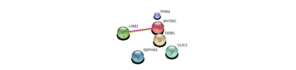 http://string-db.org/version_10/api/image/networkList?limit=0&targetmode=proteins&caller_identity=gene_cards&network_flavor=evidence&identifiers=9606.ENSP00000364934%0d%0a9606.ENSP00000261839%0d%0a9606.ENSP00000310596%0d%0a9606.ENSP00000387100%0d%0a9606.ENSP00000301764%0d%0a9606.ENSP00000367893%0d%0a