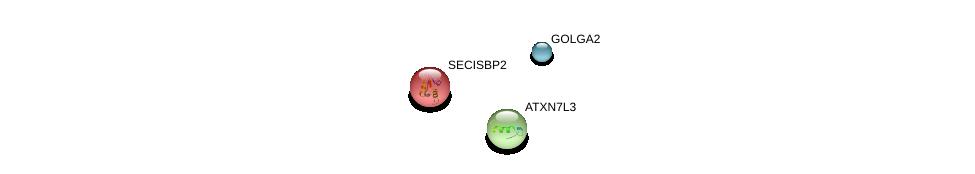 http://string-db.org/version_10/api/image/networkList?limit=0&targetmode=proteins&caller_identity=gene_cards&network_flavor=evidence&identifiers=9606.ENSP00000364965%0d%0a9606.ENSP00000397259%0d%0a9606.ENSP00000416097%0d%0a