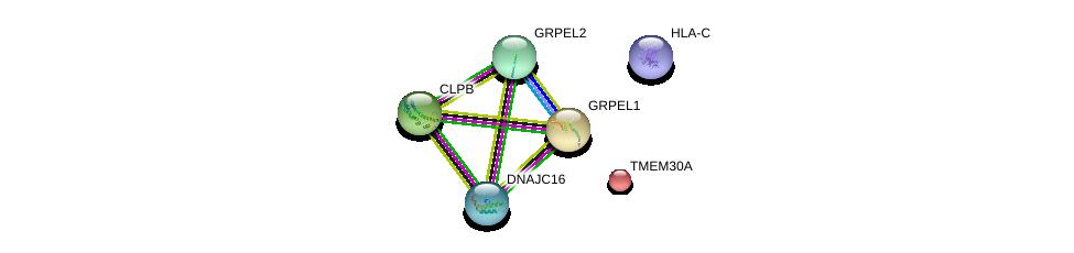 http://string-db.org/version_10/api/image/networkList?limit=0&targetmode=proteins&caller_identity=gene_cards&network_flavor=evidence&identifiers=9606.ENSP00000365007%0d%0a9606.ENSP00000230461%0d%0a9606.ENSP00000365402%0d%0a9606.ENSP00000294053%0d%0a9606.ENSP00000329558%0d%0a9606.ENSP00000264954%0d%0a