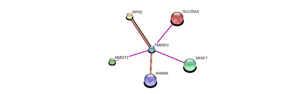 http://string-db.org/version_10/api/image/networkList?limit=0&targetmode=proteins&caller_identity=gene_cards&network_flavor=evidence&identifiers=9606.ENSP00000365567%0d%0a9606.ENSP00000228318%0d%0a9606.ENSP00000237530%0d%0a9606.ENSP00000306220%0d%0a9606.ENSP00000325905%0d%0a9606.ENSP00000420127%0d%0a