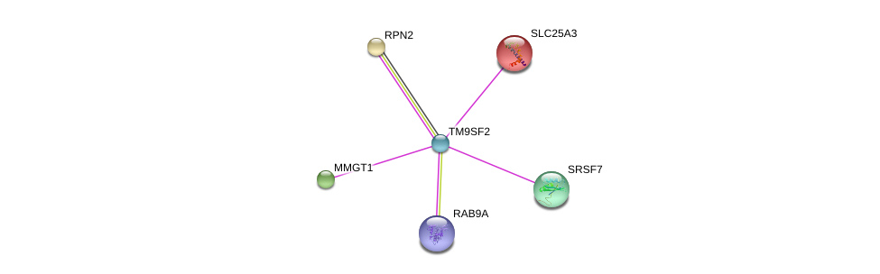 http://string-db.org/version_10/api/image/networkList?limit=0&targetmode=proteins&caller_identity=gene_cards&network_flavor=evidence&identifiers=9606.ENSP00000365567%0d%0a9606.ENSP00000325905%0d%0a9606.ENSP00000306220%0d%0a9606.ENSP00000237530%0d%0a9606.ENSP00000228318%0d%0a9606.ENSP00000420127%0d%0a