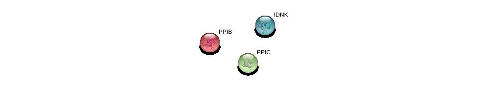 http://string-db.org/version_10/api/image/networkList?limit=0&targetmode=proteins&caller_identity=gene_cards&network_flavor=evidence&identifiers=9606.ENSP00000365601%0d%0a9606.ENSP00000303057%0d%0a9606.ENSP00000300026%0d%0a