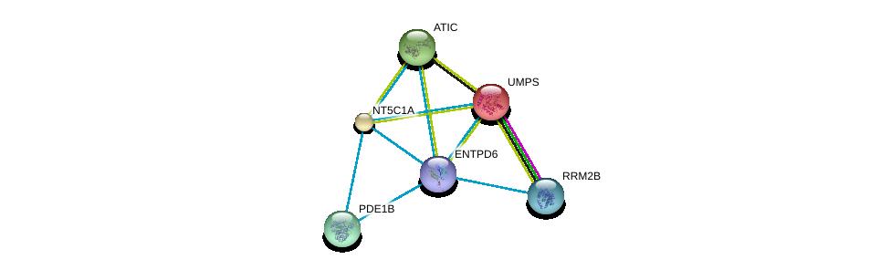 http://string-db.org/version_10/api/image/networkList?limit=0&targetmode=proteins&caller_identity=gene_cards&network_flavor=evidence&identifiers=9606.ENSP00000365840%0d%0a9606.ENSP00000232607%0d%0a9606.ENSP00000235628%0d%0a9606.ENSP00000236959%0d%0a9606.ENSP00000243052%0d%0a9606.ENSP00000251810%0d%0a