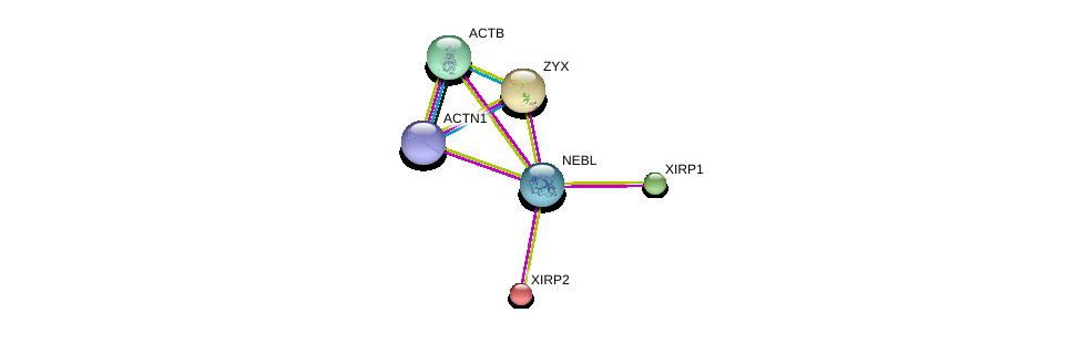 http://string-db.org/version_10/api/image/networkList?limit=0&targetmode=proteins&caller_identity=gene_cards&network_flavor=evidence&identifiers=9606.ENSP00000366326%0d%0a9606.ENSP00000295237%0d%0a9606.ENSP00000343140%0d%0a9606.ENSP00000324422%0d%0a9606.ENSP00000377941%0d%0a9606.ENSP00000349960%0d%0a