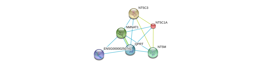 http://string-db.org/version_10/api/image/networkList?limit=0&targetmode=proteins&caller_identity=gene_cards&network_flavor=evidence&identifiers=9606.ENSP00000366410%0d%0a9606.ENSP00000373674%0d%0a9606.ENSP00000433415%0d%0a9606.ENSP00000235628%0d%0a9606.ENSP00000378782%0d%0a9606.ENSP00000242210%0d%0a