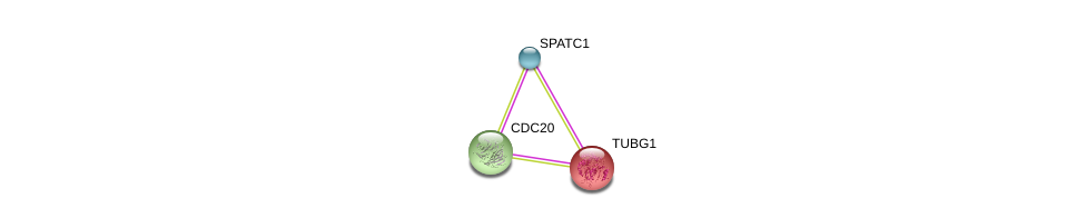 http://string-db.org/version_10/api/image/networkList?limit=0&targetmode=proteins&caller_identity=gene_cards&network_flavor=evidence&identifiers=9606.ENSP00000366690%0d%0a9606.ENSP00000308450%0d%0a9606.ENSP00000251413%0d%0a