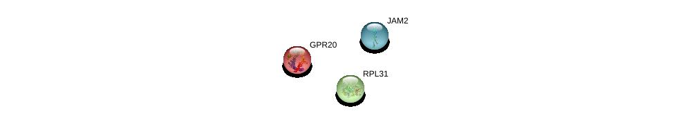 http://string-db.org/version_10/api/image/networkList?limit=0&targetmode=proteins&caller_identity=gene_cards&network_flavor=evidence&identifiers=9606.ENSP00000366970%0d%0a9606.ENSP00000386717%0d%0a9606.ENSP00000420419%0d%0a