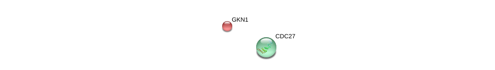 http://string-db.org/version_10/api/image/networkList?limit=0&targetmode=proteins&caller_identity=gene_cards&network_flavor=evidence&identifiers=9606.ENSP00000367172%0d%0a9606.ENSP00000434614%0d%0a