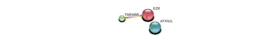 http://string-db.org/version_10/api/image/networkList?limit=0&targetmode=proteins&caller_identity=gene_cards&network_flavor=evidence&identifiers=9606.ENSP00000367227%0d%0a9606.ENSP00000338934%0d%0a9606.ENSP00000415822%0d%0a