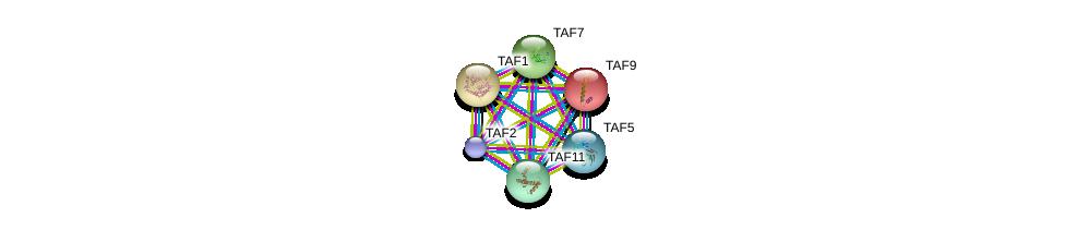 http://string-db.org/version_10/api/image/networkList?limit=0&targetmode=proteins&caller_identity=gene_cards&network_flavor=evidence&identifiers=9606.ENSP00000367406%0d%0a9606.ENSP00000358854%0d%0a9606.ENSP00000354633%0d%0a9606.ENSP00000312709%0d%0a9606.ENSP00000217893%0d%0a9606.ENSP00000276072%0d%0a