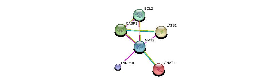 http://string-db.org/version_10/api/image/networkList?limit=0&targetmode=proteins&caller_identity=gene_cards&network_flavor=evidence&identifiers=9606.ENSP00000367407%0d%0a9606.ENSP00000232461%0d%0a9606.ENSP00000395538%0d%0a9606.ENSP00000253339%0d%0a9606.ENSP00000329623%0d%0a9606.ENSP00000311032%0d%0a