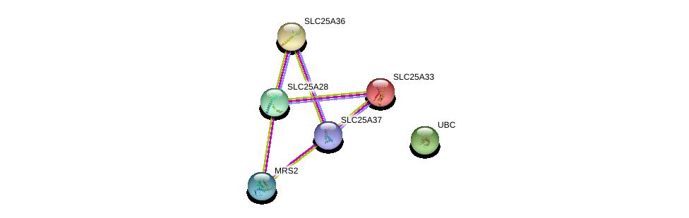 http://string-db.org/version_10/api/image/networkList?limit=0&targetmode=proteins&caller_identity=gene_cards&network_flavor=evidence&identifiers=9606.ENSP00000367637%0d%0a9606.ENSP00000359526%0d%0a9606.ENSP00000429200%0d%0a9606.ENSP00000320688%0d%0a9606.ENSP00000306328%0d%0a9606.ENSP00000344818%0d%0a