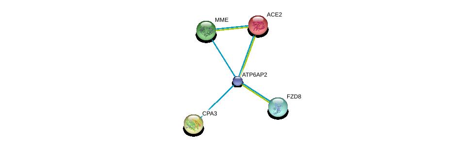 http://string-db.org/version_10/api/image/networkList?limit=0&targetmode=proteins&caller_identity=gene_cards&network_flavor=evidence&identifiers=9606.ENSP00000367697%0d%0a9606.ENSP00000363826%0d%0a9606.ENSP00000363826%0d%0a9606.ENSP00000252519%0d%0a9606.ENSP00000296046%0d%0a9606.ENSP00000353679%0d%0a