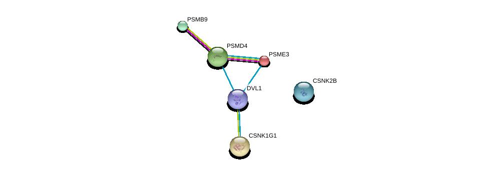 http://string-db.org/version_10/api/image/networkList?limit=0&targetmode=proteins&caller_identity=gene_cards&network_flavor=evidence&identifiers=9606.ENSP00000368169%0d%0a9606.ENSP00000365025%0d%0a9606.ENSP00000363993%0d%0a9606.ENSP00000305777%0d%0a9606.ENSP00000357879%0d%0a9606.ENSP00000293362%0d%0a