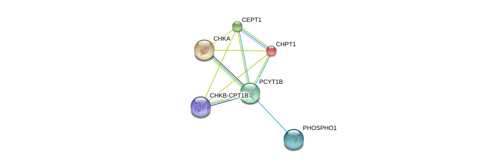 http://string-db.org/version_10/api/image/networkList?limit=0&targetmode=proteins&caller_identity=gene_cards&network_flavor=evidence&identifiers=9606.ENSP00000368439%0d%0a9606.ENSP00000229266%0d%0a9606.ENSP00000457031%0d%0a9606.ENSP00000406909%0d%0a9606.ENSP00000349696%0d%0a9606.ENSP00000265689%0d%0a