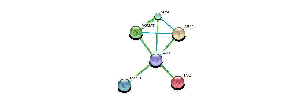 http://string-db.org/version_10/api/image/networkList?limit=0&targetmode=proteins&caller_identity=gene_cards&network_flavor=evidence&identifiers=9606.ENSP00000368572%0d%0a9606.ENSP00000354193%0d%0a9606.ENSP00000265131%0d%0a9606.ENSP00000367309%0d%0a9606.ENSP00000366156%0d%0a9606.ENSP00000364986%0d%0a