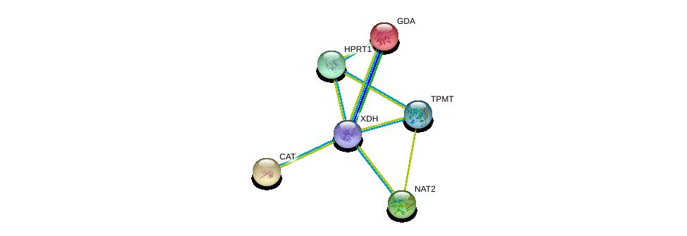 http://string-db.org/version_10/api/image/networkList?limit=0&targetmode=proteins&caller_identity=gene_cards&network_flavor=evidence&identifiers=9606.ENSP00000368727%0d%0a9606.ENSP00000286479%0d%0a9606.ENSP00000238018%0d%0a9606.ENSP00000241052%0d%0a9606.ENSP00000298556%0d%0a9606.ENSP00000312304%0d%0a