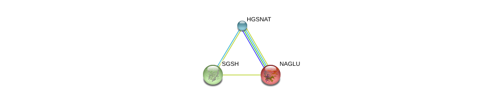 http://string-db.org/version_10/api/image/networkList?limit=0&targetmode=proteins&caller_identity=gene_cards&network_flavor=evidence&identifiers=9606.ENSP00000368965%0d%0a9606.ENSP00000314606%0d%0a9606.ENSP00000225927%0d%0a