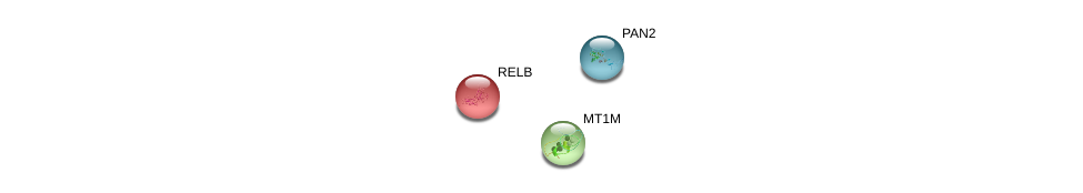http://string-db.org/version_10/api/image/networkList?limit=0&targetmode=proteins&caller_identity=gene_cards&network_flavor=evidence&identifiers=9606.ENSP00000369146%0d%0a9606.ENSP00000401721%0d%0a9606.ENSP00000221452%0d%0a