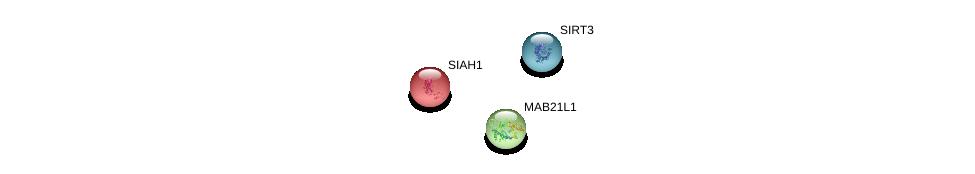 http://string-db.org/version_10/api/image/networkList?limit=0&targetmode=proteins&caller_identity=gene_cards&network_flavor=evidence&identifiers=9606.ENSP00000369251%0d%0a9606.ENSP00000349156%0d%0a9606.ENSP00000372191%0d%0a