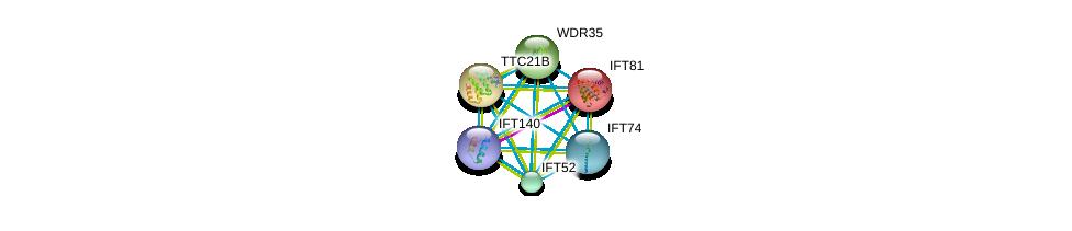 http://string-db.org/version_10/api/image/networkList?limit=0&targetmode=proteins&caller_identity=gene_cards&network_flavor=evidence&identifiers=9606.ENSP00000369402%0d%0a9606.ENSP00000406012%0d%0a9606.ENSP00000362121%0d%0a9606.ENSP00000314444%0d%0a9606.ENSP00000243344%0d%0a9606.ENSP00000242591%0d%0a
