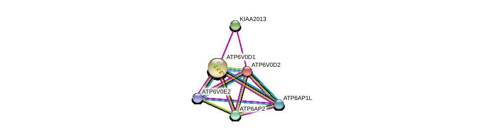 http://string-db.org/version_10/api/image/networkList?limit=0&targetmode=proteins&caller_identity=gene_cards&network_flavor=evidence&identifiers=9606.ENSP00000369513%0d%0a9606.ENSP00000365756%0d%0a9606.ENSP00000367697%0d%0a9606.ENSP00000290949%0d%0a9606.ENSP00000285393%0d%0a9606.ENSP00000411672%0d%0a