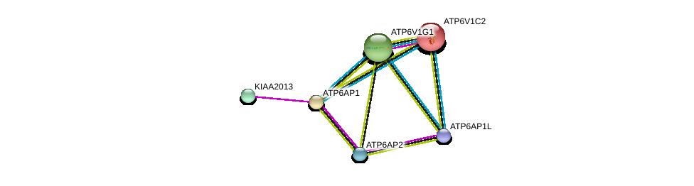 http://string-db.org/version_10/api/image/networkList?limit=0&targetmode=proteins&caller_identity=gene_cards&network_flavor=evidence&identifiers=9606.ENSP00000369513%0d%0a9606.ENSP00000365756%0d%0a9606.ENSP00000367697%0d%0a9606.ENSP00000363162%0d%0a9606.ENSP00000358777%0d%0a9606.ENSP00000272238%0d%0a