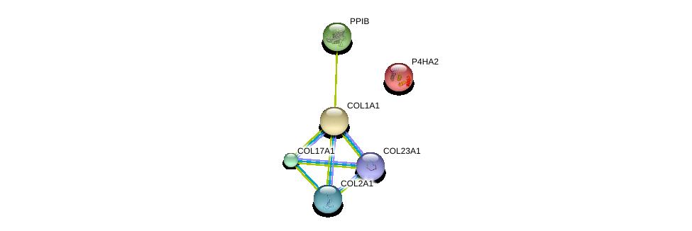 http://string-db.org/version_10/api/image/networkList?limit=0&targetmode=proteins&caller_identity=gene_cards&network_flavor=evidence&identifiers=9606.ENSP00000369889%0d%0a9606.ENSP00000340937%0d%0a9606.ENSP00000375069%0d%0a9606.ENSP00000300026%0d%0a9606.ENSP00000225964%0d%0a9606.ENSP00000166534%0d%0a