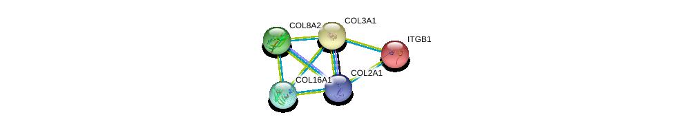 http://string-db.org/version_10/api/image/networkList?limit=0&targetmode=proteins&caller_identity=gene_cards&network_flavor=evidence&identifiers=9606.ENSP00000369889%0d%0a9606.ENSP00000362776%0d%0a9606.ENSP00000305913%0d%0a9606.ENSP00000304408%0d%0a9606.ENSP00000304408%0d%0a9606.ENSP00000303351%0d%0a