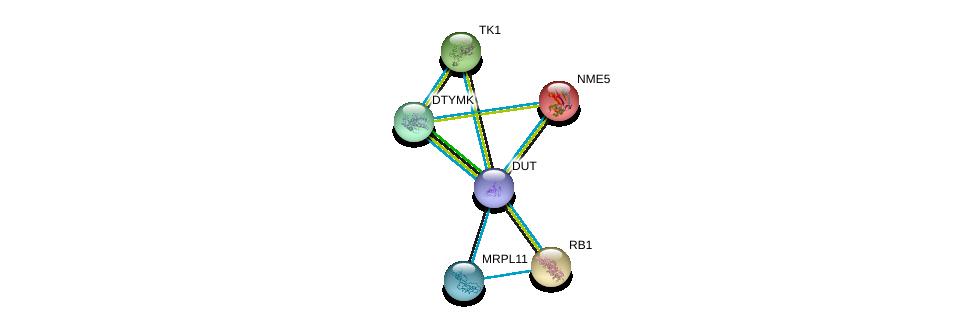 http://string-db.org/version_10/api/image/networkList?limit=0&targetmode=proteins&caller_identity=gene_cards&network_flavor=evidence&identifiers=9606.ENSP00000370376%0d%0a9606.ENSP00000301634%0d%0a9606.ENSP00000304802%0d%0a9606.ENSP00000267163%0d%0a9606.ENSP00000308897%0d%0a9606.ENSP00000265191%0d%0a