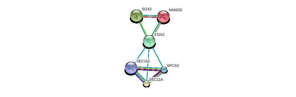 http://string-db.org/version_10/api/image/networkList?limit=0&targetmode=proteins&caller_identity=gene_cards&network_flavor=evidence&identifiers=9606.ENSP00000370408%0d%0a9606.ENSP00000427463%0d%0a9606.ENSP00000229307%0d%0a9606.ENSP00000323588%0d%0a9606.ENSP00000268220%0d%0a9606.ENSP00000468633%0d%0a