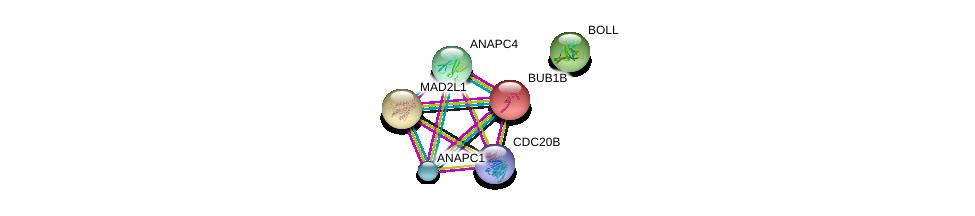 http://string-db.org/version_10/api/image/networkList?limit=0&targetmode=proteins&caller_identity=gene_cards&network_flavor=evidence&identifiers=9606.ENSP00000370781%0d%0a9606.ENSP00000339109%0d%0a9606.ENSP00000296509%0d%0a9606.ENSP00000287598%0d%0a9606.ENSP00000318775%0d%0a9606.ENSP00000314792%0d%0a